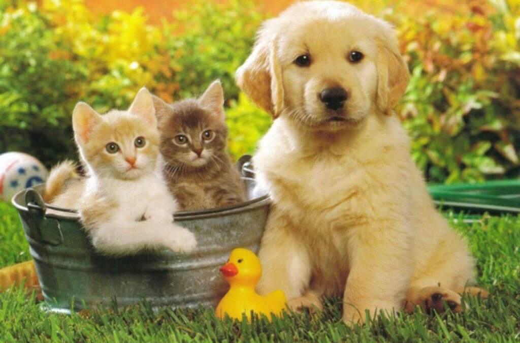 Difendi i tuoi animali domestici da pulci zecche zanzare e co.