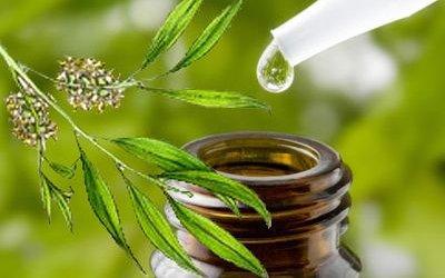 Tea Tree Oil (Malaleuca)
