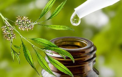 Tea Tree Oil (Malaleuca)